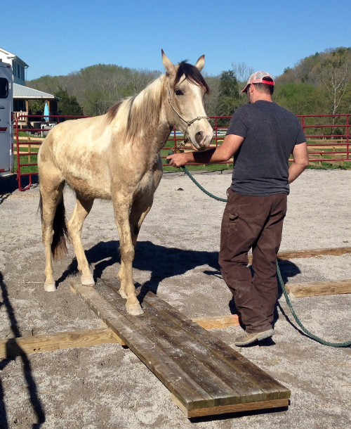Open Reins Counseling and Learning